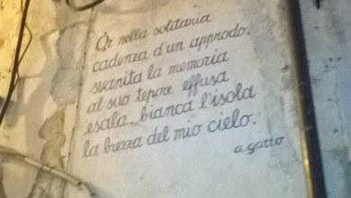 Gatto_12