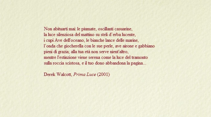 bustina chiara - Walcott